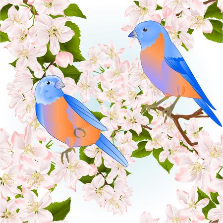 Seamless texture small birds thrush Bluebird  on a apple tree with flowers vintage vector illustration editable hand draw Иллюстрация