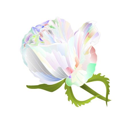 Rosebud multicolored  on a white background vintage vector botanical illustration editable hand draw Illustration