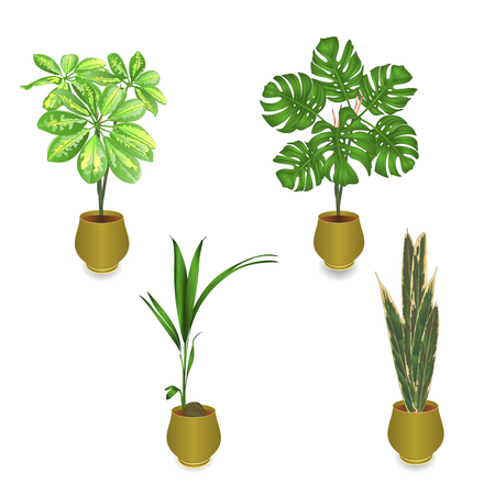 Tropical plants in pot Schefflera Philodendron palm -coconut Sansevieria on white background set one vintage vector illustration editable hand draw