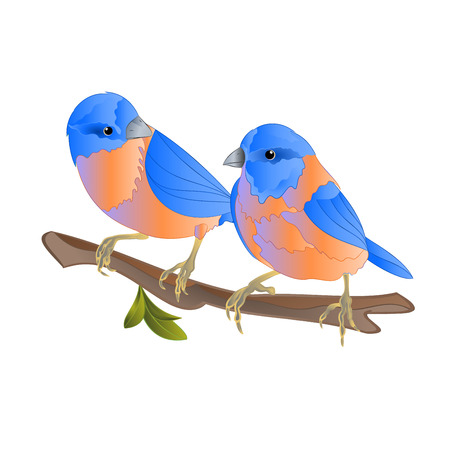 Bluebirds  thrush small songbirdons on an  branch on a white background spring background vintage vector illustration editable hand draw Иллюстрация