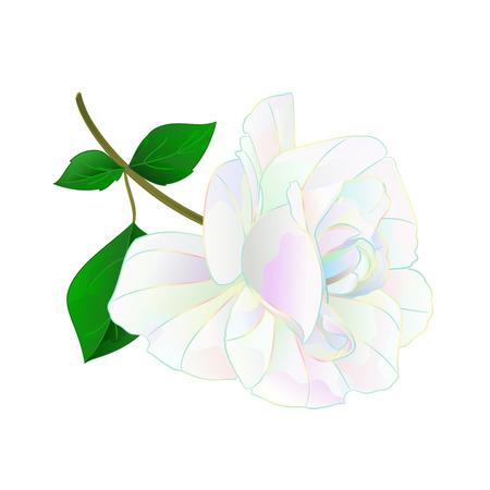 Flor multicolor tallo de rosa y hojas sobre un fondo blanco vintage vector ilustración botánica editable mano dibujar Ilustración de vector