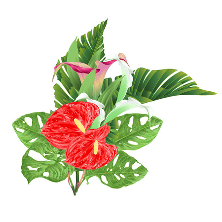 Bouquet with tropical flowers floral arrangement, with beautiful lilies Cala and anthurium and banana leaves and monstera vintage vector illustration editable hand draw Vektoros illusztráció
