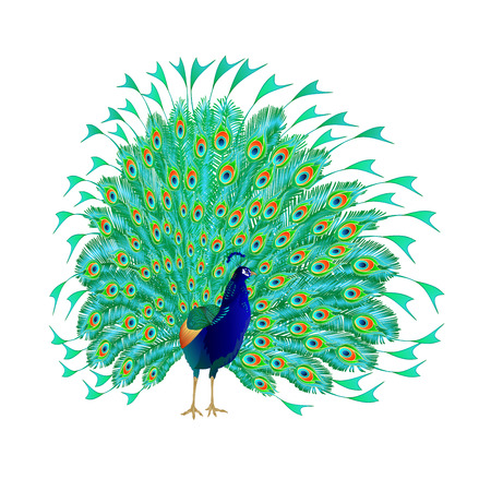 Peacocks beauty exotic birds natural and tropical flowers watercoloron a white background vintage vector illustration editable hand drawn