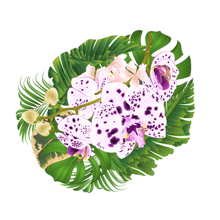 Tropical flowers branch orchids  dots purple and white  Phalaenopsis with  tropical leaves of banana  ficus,palm,philodendron on white background vector illustration editable hand draw