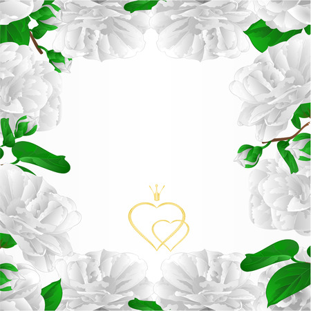Border white flowers Camellia Japonica with buds greeting card vintage vector illustration editable hand draw