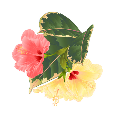 Tropical flowers  floral arrangement, with pink and yellow hibiscus and  ficus on a white background vintage vector illustration  editable hand draw Illustration