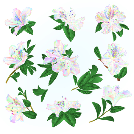Multi colored  flowers rhododendrons and leaves  mountain shrub on a blue background  vintage vector illustration editable hand draw Illusztráció