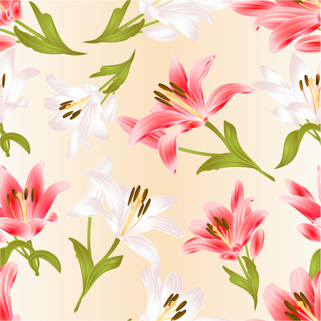 Seamless texture white and red Lily  Lilium candidum,flower with leaves and bud festive background vintage vector illustration editable hand drawn