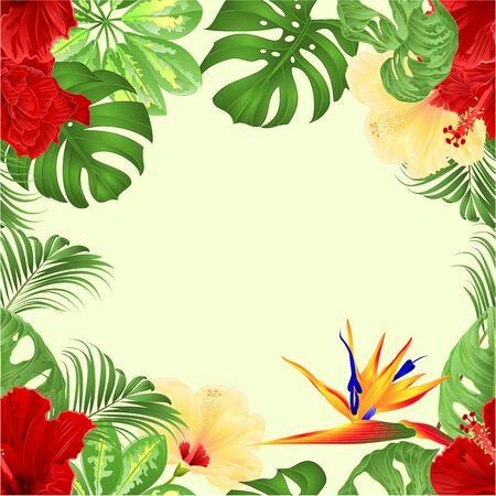 Ramo de borde transparente con arreglo floral de flores tropicales con Strelitzia y palma de hibisco rojo y amarillo, filodendro y Schefflera y Monstera ilustración vectorial vintage editable