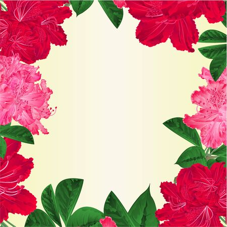 Frame  flowers pink white and red rhododendrons twig Mountain shrub vintage vector botanical illustration hand draw Illusztráció