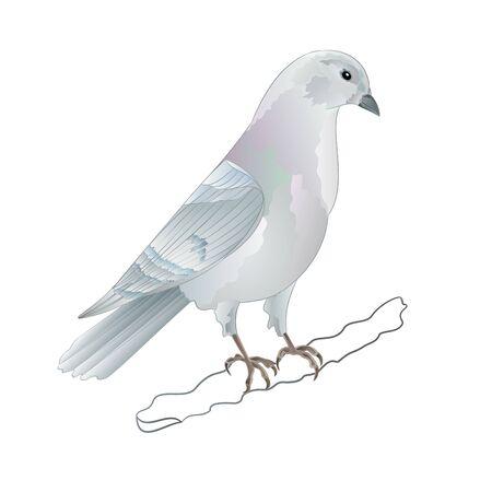 Carrier pigeon white domestic breeds sports bird vintage   vector  illustration for design hand draw Stock Illustratie