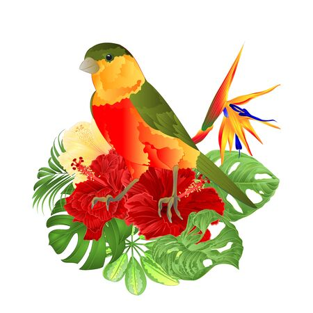 Tropical bird cute small  funny  bird and red hibiscus and Strelitzia reginae monstera palm watercolor style on a white background vintage vector illustration editable hand draw