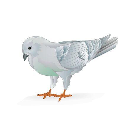 White pigeon  breeding pet bird   domestic breeds sports bird on white background vintage   vector  animals illustration for design editable hand draw Stock Illustratie