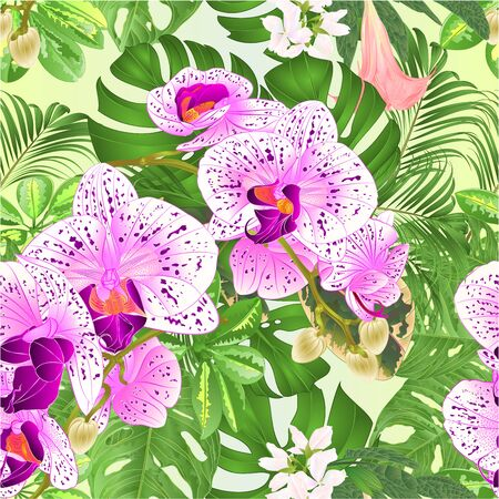 Seamless texture  tropical flowers  floral arrangement beautiful orchids Phalaenopsis  purple and white with    Schefflera  and Monstera vintage vector illustration  editable hand draw