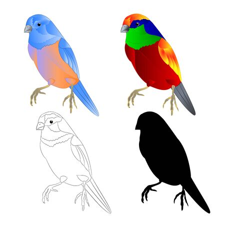 Bluebird small thrush and tropical bird  outline and silhouette on a white background  vintage vector illustration editable hand draw Иллюстрация