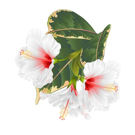 Tropical flowers  white hibiscus and  ficus    vector Stockfoto - 128182345