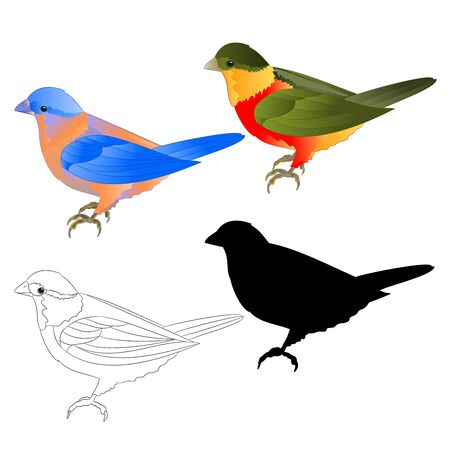 Bluebird  thrush and tropical bird silhouette and  outline  on a white background  vintage vector illustration editable hand draw