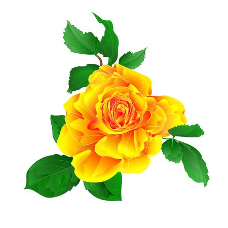 Stem flower yellow rose and leaves watercolor vintage on a white background  vintage vector illustration editable hand draw