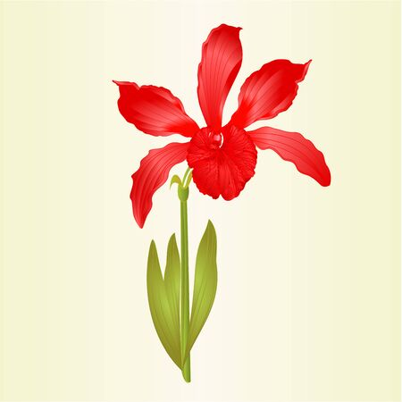 Tropical Orchid flower Cattleya type hybrid orchid purple colored petals on white background vintage vector illustration editable hand draw Foto de archivo - 128184074