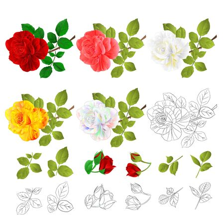 Flower Various red pink white yellow rose and leaves natural and outline vintage on a white background vector illustration editable hand draw
