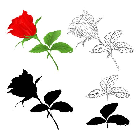 Rosebud  red natural and outline and silhouette  twig with leaves on a white background vintage vector illustration editable hand draw Foto de archivo - 128184083