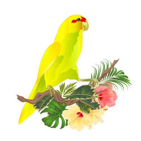Bird Indian Ringneck Parrot in Yellow on branch with tropical flowers hibiscus, palm,philodendron watercolor on a white background vintage vector illustration editable Hand draw Foto de archivo - 128184094