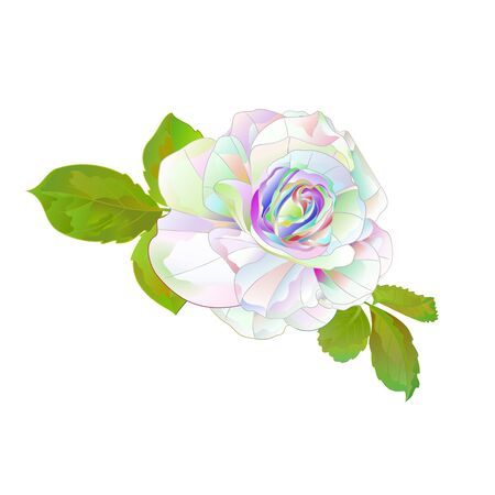 Multi colored  rose simple stem with leaves natural  vintage on a white background vector illustration editable hand draw Stock Illustratie
