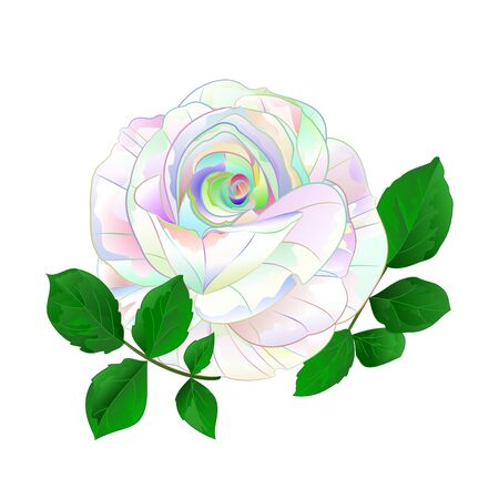 Rose multicolored simple stem with leaves  vintage on a white background vintage vector illustration  hand draw