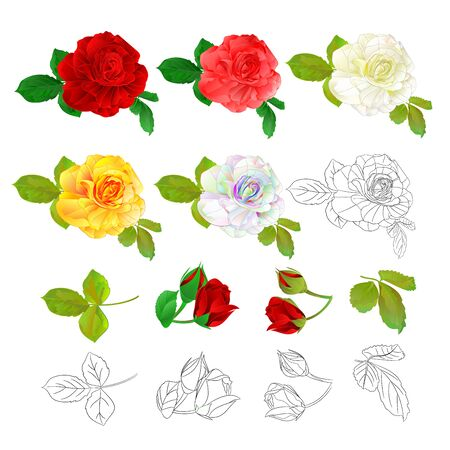Rose red pink white yellow colored and outline natural and outline vintage on a white background vector illustration editable hand draw