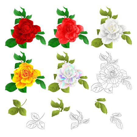 Rose red pink white yellow colored and outline  with buds and leaves natural watercolor  vintage  on white background vector illustration editable hand draw Stock Illustratie