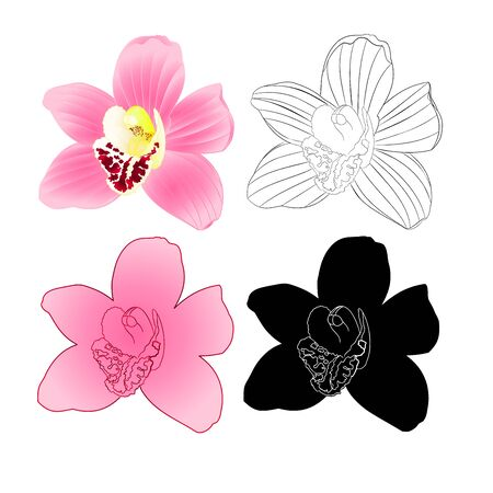 Tropical Orchid Cymbidium pink  flower natural and silhouette  and outline  on white background vintage vector illustration editable hand draw Stock Illustratie