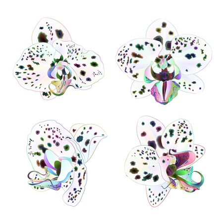 Orchids Phalaenopsis with dots multi colored  closeup beautiful flower  isolated set second on a white background vintage  vector illustration editable  hand draw Stock Illustratie