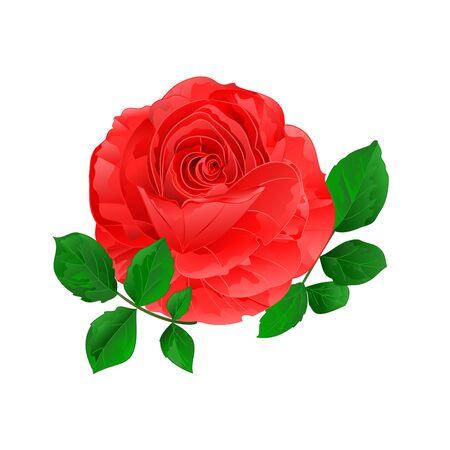 Rose  pink simple stem with leaves  vintage on a white background vintage vector illustration  hand draw