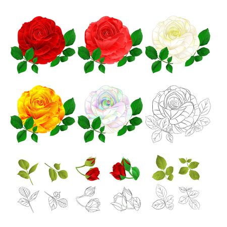 Rose  pink red white yellow colored and outline natural and outline vintage on a white background vector illustration editable hand draw Stock Illustratie
