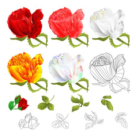 Roses buds red pink white yellow colored and outline  and leaves vintage  on a white background  vector illustration  hand draw editable Stock Illustratie