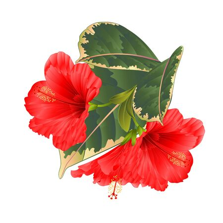 Tropical flowers  floral arrangement, with red hibiscus and  ficus on a white background vintage vector illustration  editable hand draw Illustration