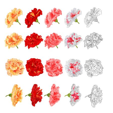 Hibiscus tropical flowers yellow red pink white  and outline set  on a white background vintage  vector  botanical illustration editable hand draw