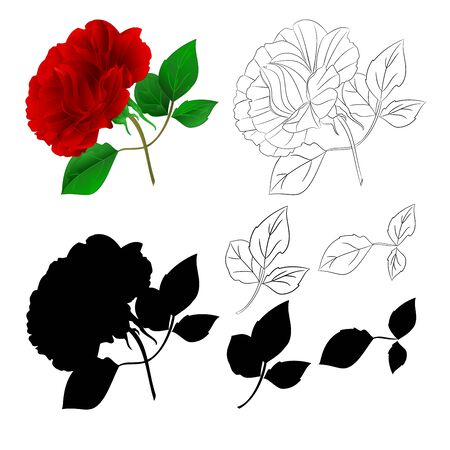 Rose Purple stem and leaves natural and silhouette  and outline on a white background vintage vector illustration  hand draw editable