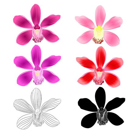Various flowers tropical Orchids Cymbidium purple pink lila red flower realistic  and outline and silhouette on white background vintage vector illustration editable hand draw Ilustração