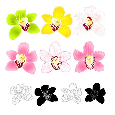 Tropical Orchid Cymbidium green pink yellow white flower realistic  and outline and silhouette on white background vintage vector illustration editable hand draw Ilustração