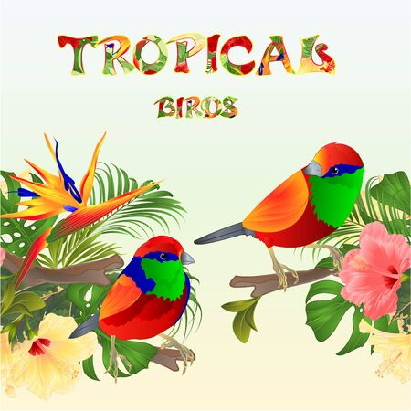 Tropical seamless border tropical birds Euplectes and tropical flowers pink and yellow hibiscus and Strelitzia palm,philodendron and ficus vintage vector illustration editable hand draw