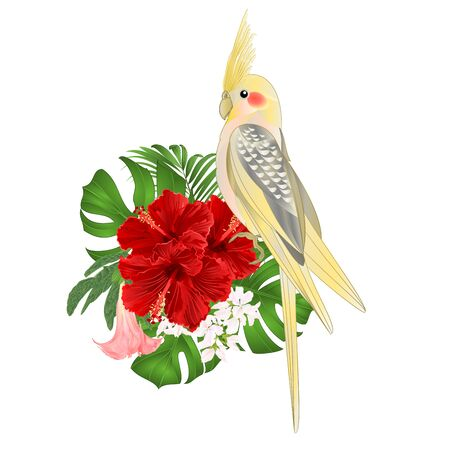 Yellow cockatiel cute tropical bird funny  parrot watercolor style on a white background vintage vector illustration editable hand draw