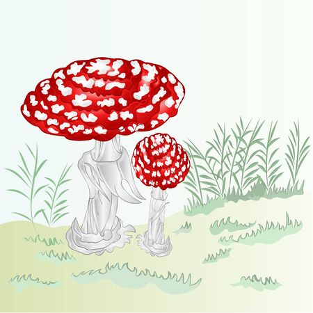 Red  toadstool Mushroom Amanita Fly Agaric with green grass  autumn background vector illustration editable hand draw Ilustração