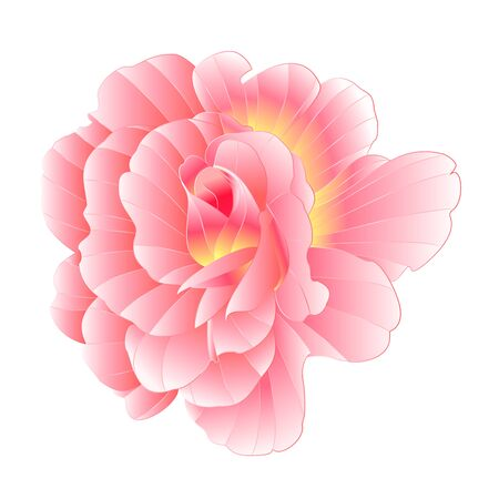 Pink rose with orange center watercolor  on a white background vector illustration editable hand draw Ilustração