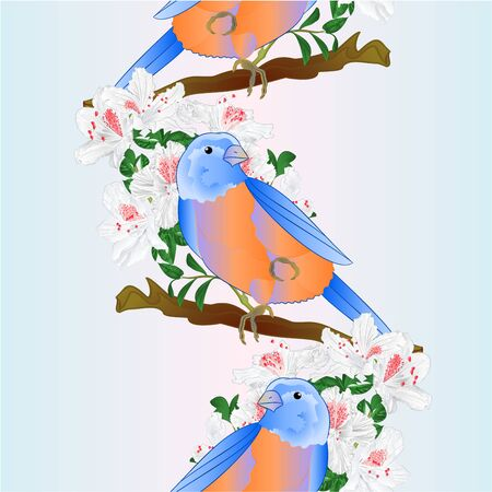 Vertical border seamless background small songbirdon Bluebird  thrush and white rhododendron spring background vintage vector illustration editable hand draw