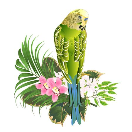 Budgerigar, home pet ,green pet parakeet with tropical flowers floral arrangement, with beautiful pink orchids cymbidium Ficus benjamina and ficus natural background vintage vector illustration  editable hand draw Illustration