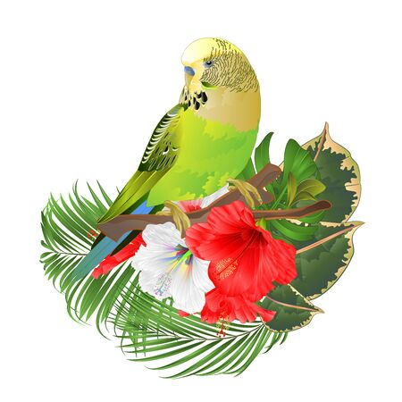 Green parakeet Budgerigar, home pet , pet parakeet  or budgie or shell parakeet  with tropical flowers  floral arrangement with beautiful white and red hibiscus and  palm,philodendron  ficus vintage vector illustration  editable hand draw
