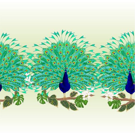 Horizontal border seamless background Peacock beauty tropical bird on branch with ficus and philodendron watercolor vintage vector illustration editable hand drawn
