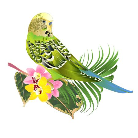Green parakeet Budgerigar, home pet , pet parakeet  or budgie or shell parakeet with Orchid cymbidium pink and yellow  palm ficus on a white background watercolor vintage vector illustration editable hand draw