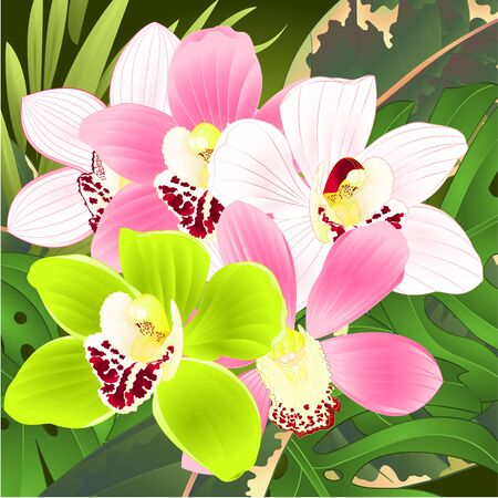 Orchids cymbidium tropical flowers pink white and green  bouquet with  palm,philodendron  vintage vector illustration editable hand draw Ilustrace